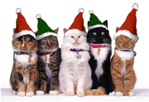 50-cats-santa-hats--large-msg-129306875282